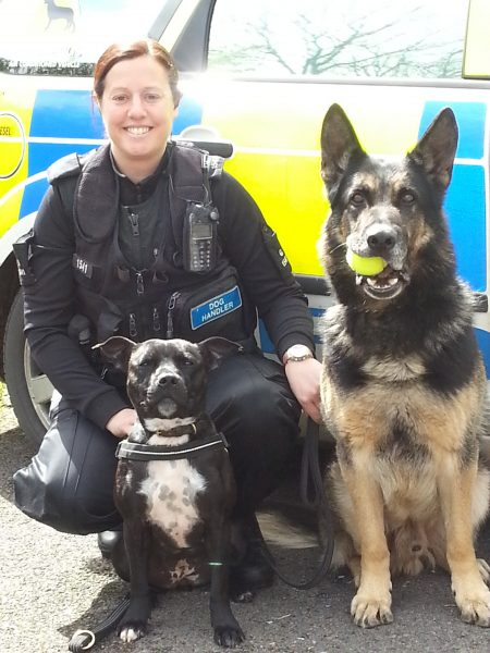 Police Dog Stella with handler Police Constable Claire Todd 2015.  Stella was rescued by West Hatch RSPCA in Taunton.  Sue Dix at West Hatch recognised Stella's potential to be a search dog.  Stella was put through  through a series of tests which she passed with flying colours. Claire took her home and she started her course in March 2014. It is normally a 6 week course to become a fully trained Drugs, Cash & Firearms dog.  Stella completed her training in just 4 weeks. (Gloucestershire Police Archives URN 1929-1)