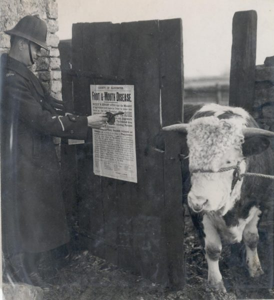 Police Constable Lewis at Kingscote posting Foot and Mouth Disease Notice 1931. (Gloucestershire Police Archives URN 62)