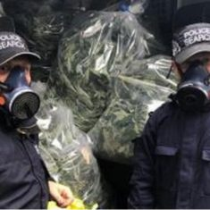 The day job goes on including raiding cannabis factories April 2020. (Gloucestershire Police Archives URN 10776-54)